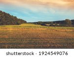 Rural Landscape With Cornfield...