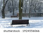 Winter In The City Park. Fresh...