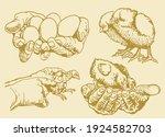 color illustration of chicks... | Shutterstock .eps vector #1924582703