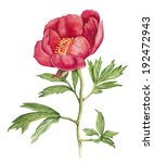red peony flower watercolor | Shutterstock . vector #192472943