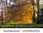 Landscape With Beech Trees In...