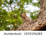 Cute Squirrel Eating An Almond...