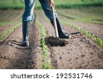 manual labor in agriculture | Shutterstock . vector #192531746