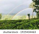 How A Rainbow Appears In A Tea...