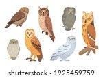 owl species set. brown  barn ... | Shutterstock .eps vector #1925459759