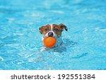 Fun In The Pool   Jack Russell...