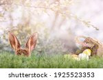 Easter Bunny Hides Behind...