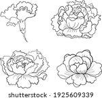 set of flower vector for... | Shutterstock .eps vector #1925609339