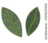 the classic leaf is isolated on ... | Shutterstock .eps vector #1925619530