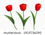 red tulips on white background. | Shutterstock .eps vector #1925736290