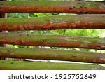 Close Up Wooden Fence In Green...