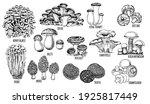 Set Edible Mushrooms Vector...