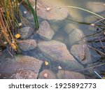 Rocks In Muddy Pond Water And...