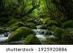 Deep Forest In Yakushima Island ...