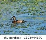 Lake Apopka Wildlife Drive...