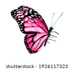 color monarch butterfly  ... | Shutterstock . vector #1926117323