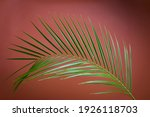 Big Date Palm Leaf Against Rust ...