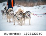 siberian husky dogs portrait in ...   Shutterstock . vector #1926122360