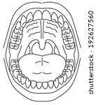 alignment,body,cavity,dental,dentist,diagnostic,doctor,electronic,hospital,illustration,medical,medicine,mouth,of,open