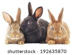 Isolated Image Of A Three Bunn...