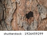 Close Up The Bark Tree With...
