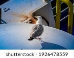 Seagull Sitting On A Flagpole...