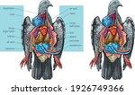 the vector illustration shows... | Shutterstock .eps vector #1926749366