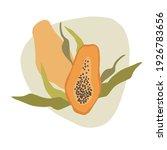 illustration of papaya fruit... | Shutterstock .eps vector #1926783656