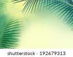 palm leaves background. | Shutterstock . vector #192679313