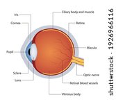 structure of anatomy human eye. ... | Shutterstock .eps vector #1926966116