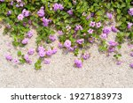 Pink Flowers On The Edge Of The ...