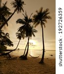 Silhouette Of Coconut Trees And ...