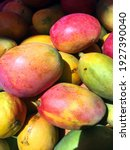 Mango Is A Type Of Succulent...