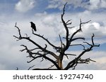 Raven Sitting On Stark Tree In...