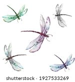 Dragonfly Watercolor...