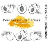peach  nectarine  vector hand... | Shutterstock .eps vector #192756518