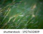 Blurred Image. Soft Focus Wild...