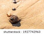 Seashell On Wet Sand On The...