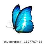 color morpho butterfly  ... | Shutterstock . vector #1927767416