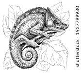 chameleon.  a graphic  black... | Shutterstock .eps vector #1927799930