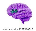 3d human brain illustration... | Shutterstock . vector #1927916816