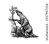 ground sloth or megatheriidae.... | Shutterstock .eps vector #1927947116