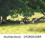 A Herd Of Deer Under The Great...