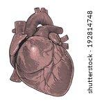 human heart in vintage...   Shutterstock .eps vector #192814748