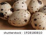 Quail eggs close up.  macro...