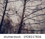 A Flock Of Pigeons Sits On A...