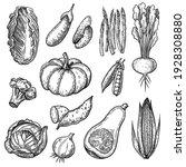 fresh vegetables sketches set.... | Shutterstock .eps vector #1928308880