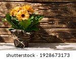 Yellow Gerbera In A Flower Pot...