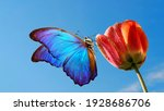 Bright Colorful Blue Morpho...