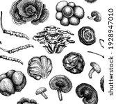 medicinal mushroom background.... | Shutterstock .eps vector #1928947010